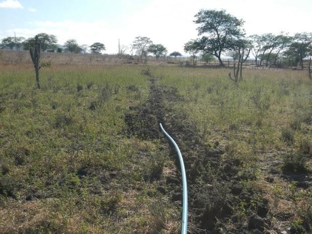 PF prende agricultor e solta dono de plantao de maconha