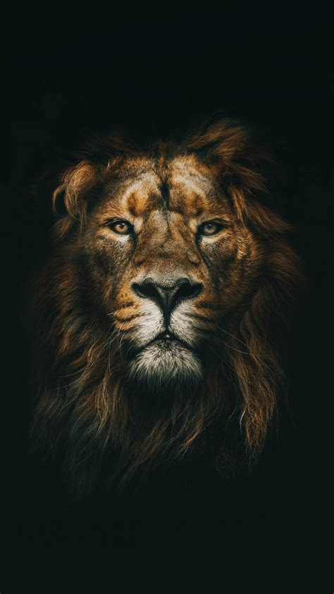 lion wallpaper   iphone iphonewallpapers