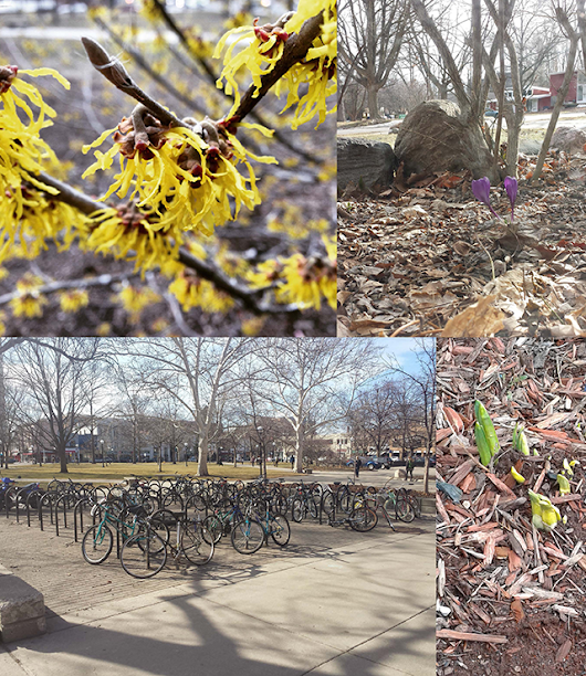 Photo Collage: First Signs of Spring | Rackham Graduate School