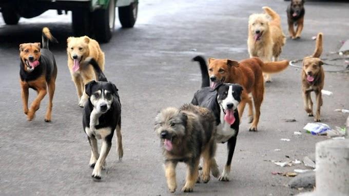 Reclusos son obligados a cuidar perros callejeros para reducir sus penas y doblegar su corazón