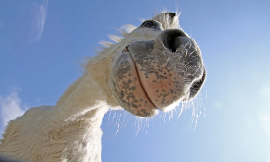 Why the long face? Researchers compile directory of horse facial expressions