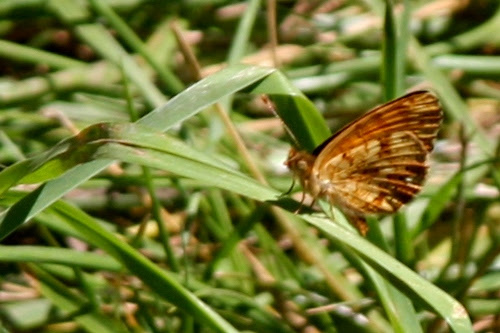 Butterfly, Wapato State Park, Sauvie Island