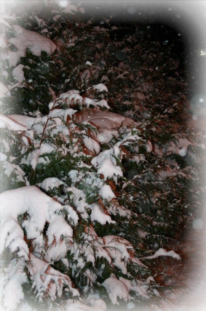 Naboens buskas