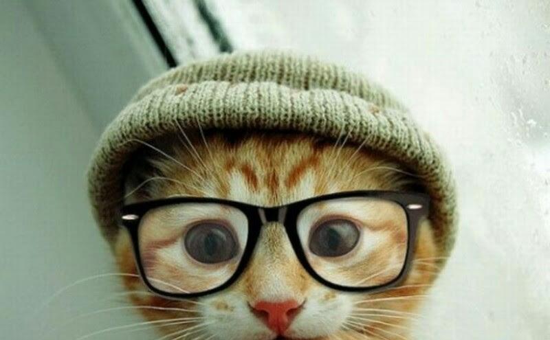 Los Gatos Mas Bonitos Del Mundo
