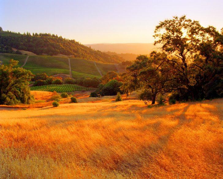 comte Sonoma en Californie US
