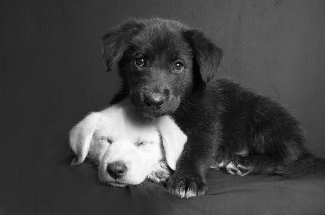 Amor canino