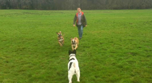 Swindon Dog Walking Services | Home