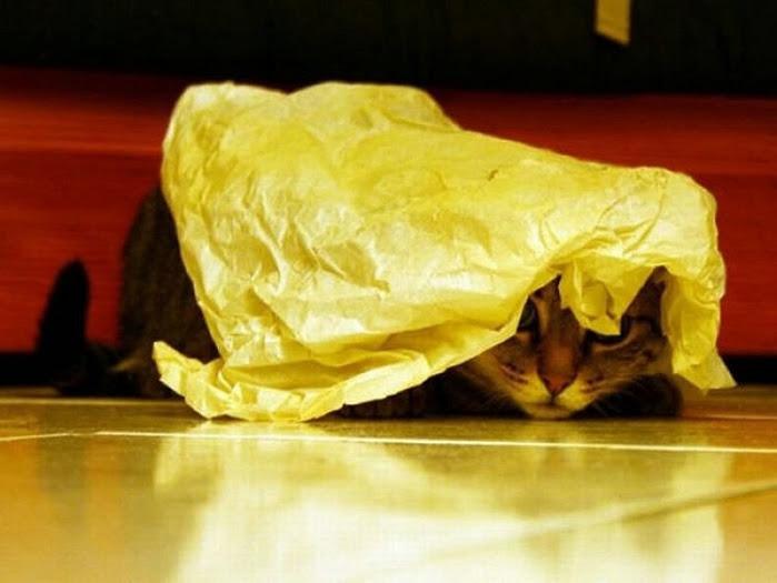 hidingcats22 (700x525, 187Kb)