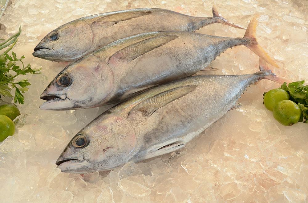 Resultado de imagem para atum