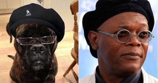 20 Animals That Look Like Celebrities