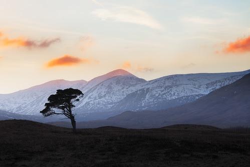 Lone Tree by svensl