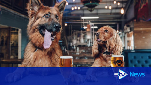 Puppy power: Brewery offers paid 'paw-ternity leave' to staff