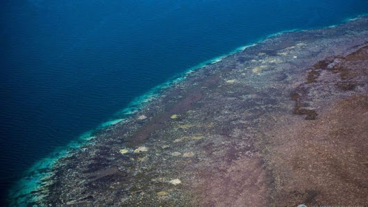 'Devastating' Great Barrier Reef bleaching worse than first thought