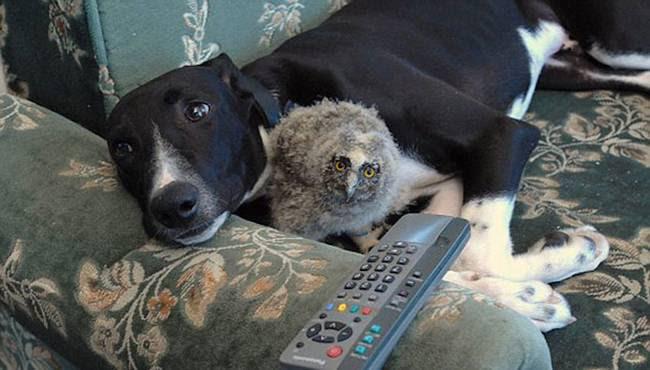 amizades-incomuns-com-animais-2