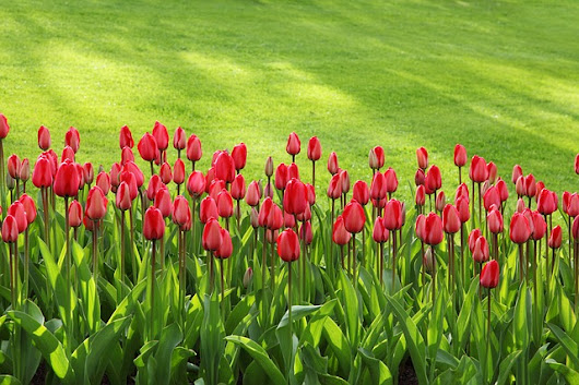 Of Tulips And Crickets