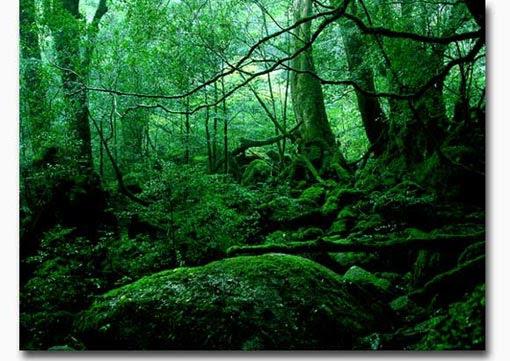もののけ姫の森の壁紙 屋久島 Murubushi Com
