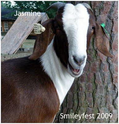 12-Jasmine---2