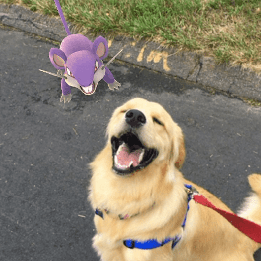 20 Dogs Totally Obsessed With Pokemon Go Because They Gotta Fetch 'Em All
