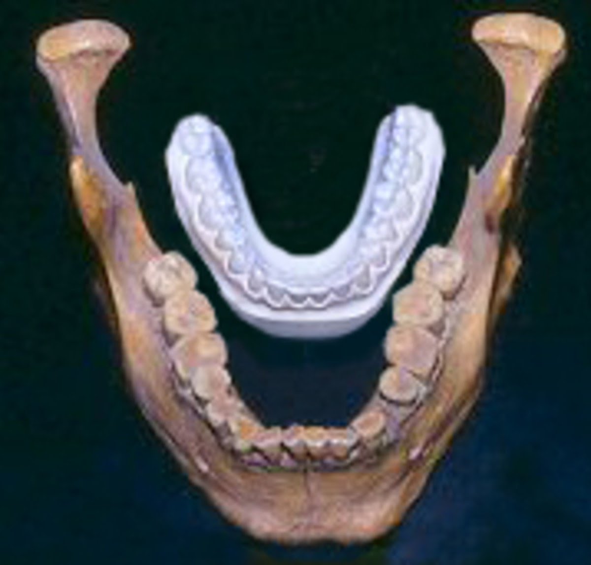 Lovelock Cave Giant Jaw Comparison