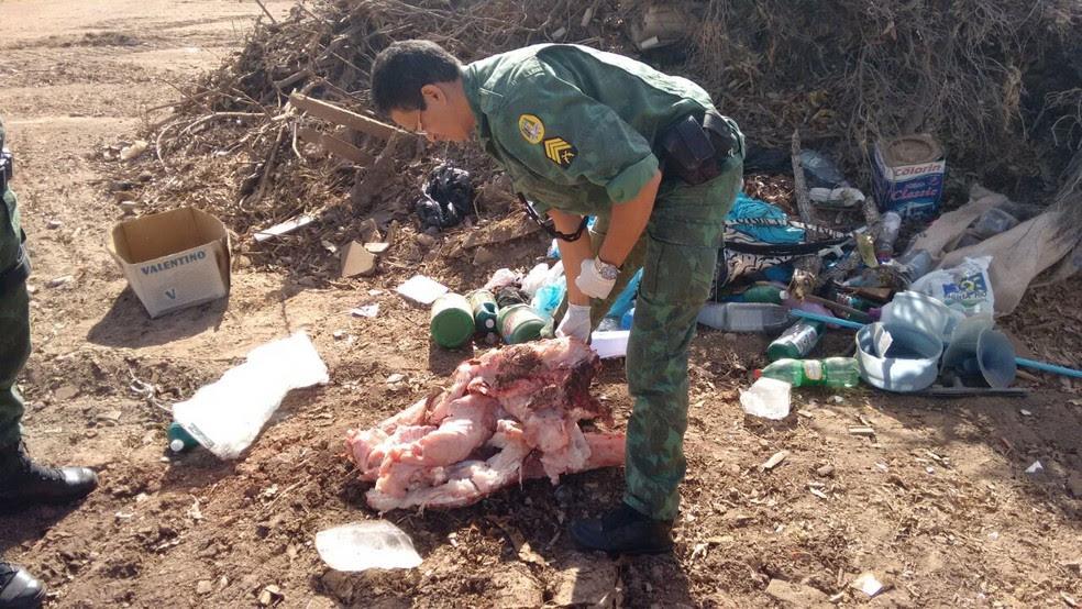 Carne de jacaré foi incinerada em aterro sanitário (Foto: Divulgação/Polícia Militar Ambiental)