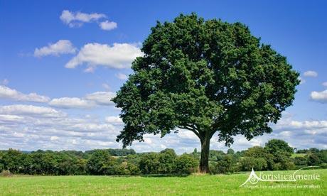 alberi_tree