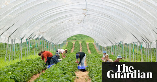 British fruit-growers say they are short of pickers this summer | UK news | The Guardian