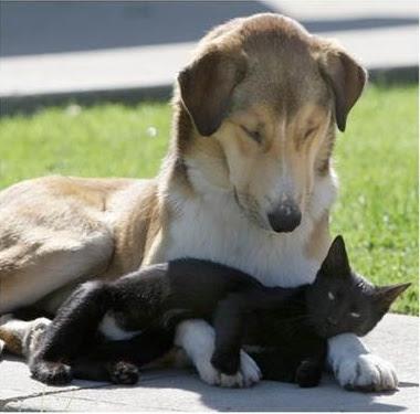 Perierga.gr - Περίεργες φιλίες ζώων