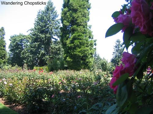 Day 19 The International Rose Test Garden - Portland - Oregon 2