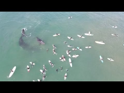 Surfistas tienen un encuentro inesperado con un par de ballenas