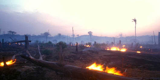 The Bleak Fate of the Amazon | by Paulo Artaxo