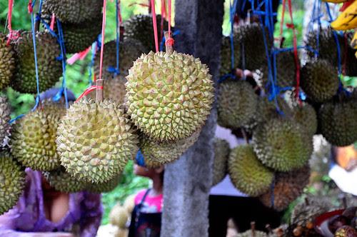 DurianStand