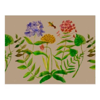 Botanical Illustration on Postcard