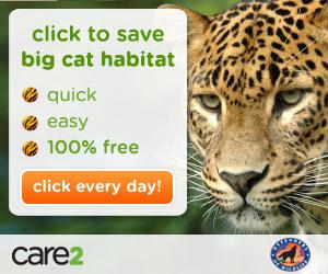 Save Big Cat Habitat