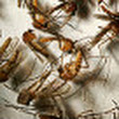 West Nile outbreak largest ever in U.S. - CNN.com