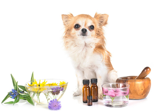 Animal Aromatherapy Top 8 Essential Oils to Use & Why