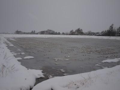 冬期湛水田