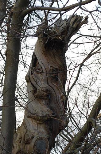Benevolent tree face