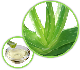 Image result for aloe vera png