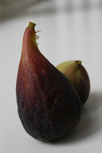 100904_first figs