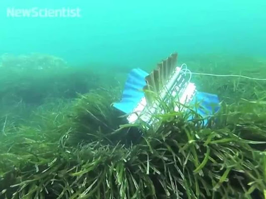 This Robot Copies A Cuttlefish To Be A Better Swimmer