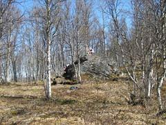 skog2