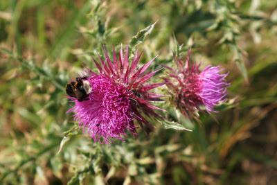 bumbling bee