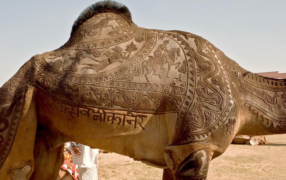 ... for camels!
