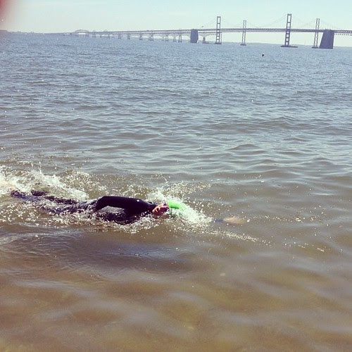 Swimming in the bay