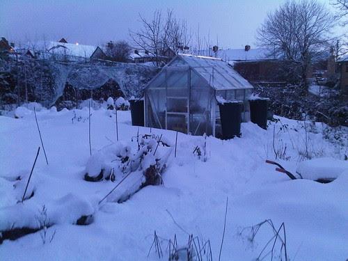 Allotment snow Jan 10 no 1