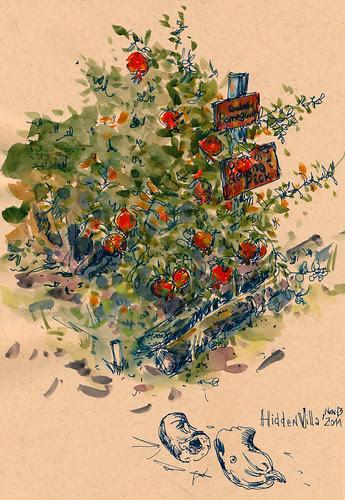 November 2011: Hidden Villa by apple-pine