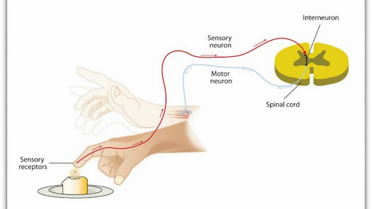 TRP channels in the Tx of muscle pain & cramps