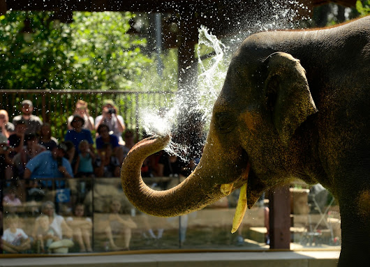 PHOTOS: World Elephant Day at the Denver Zoo