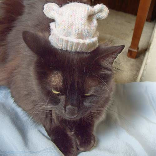 black cat wearing hat with ears