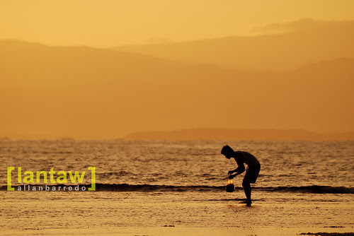 Sunrise Seaweed Gatherer